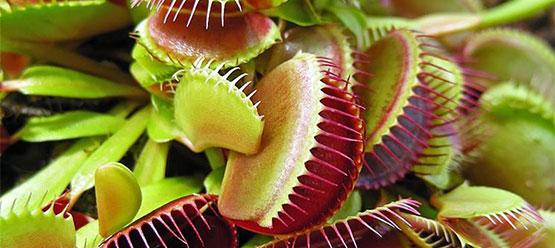 vendita-piante-carnivore_NG1